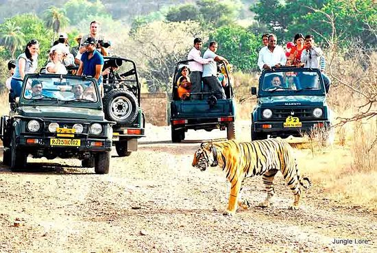 Ranthambore National Park, India: getlstd_property_photo