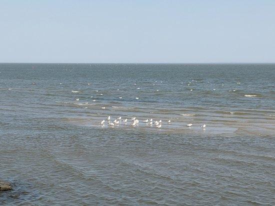 Winnipeg Beach, Canada: seagulls