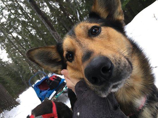 North Ridge Ranch - Dog Sledding: Captain