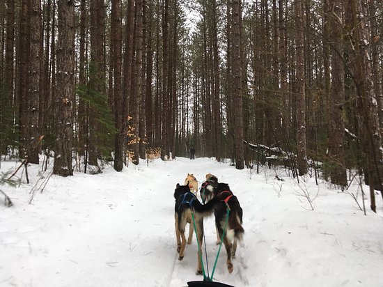 North Ridge Ranch - Dog Sledding: The hard working team doing what they were made for and LOVE