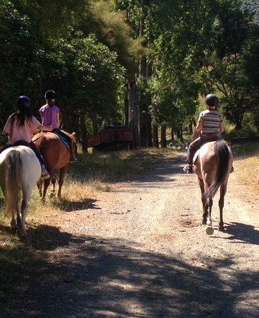 Νέλσον, Νέα Ζηλανδία: Short trek through farm lanes after the lesson