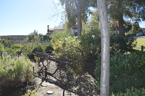 Landscape - Picture of San Diego Country Estates, Ramona - Tripadvisor