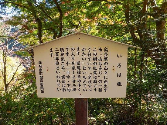 Irohakaede no Kyoju