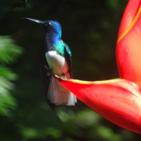 Prachtige en relaxte tour met veel verscheidenheid aan vogels.