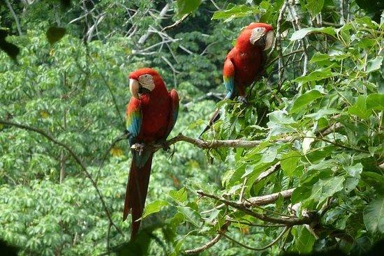 5-dages Madidi og Pampas Amazon fra...