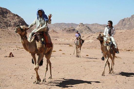 Aventure à dos de chameau de Sharm El...