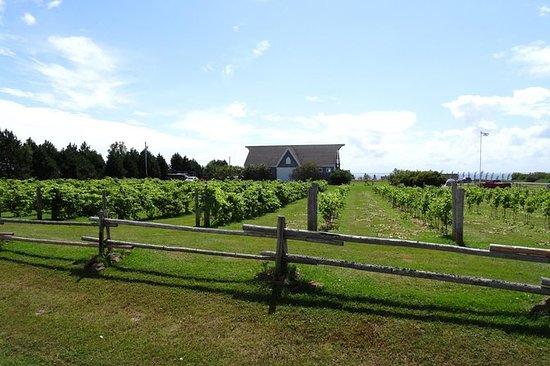 Farol costeiro privado e Winery Tour...