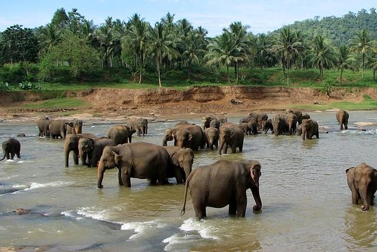 从尼甘布的pinnawala到大象孤儿院的一日游