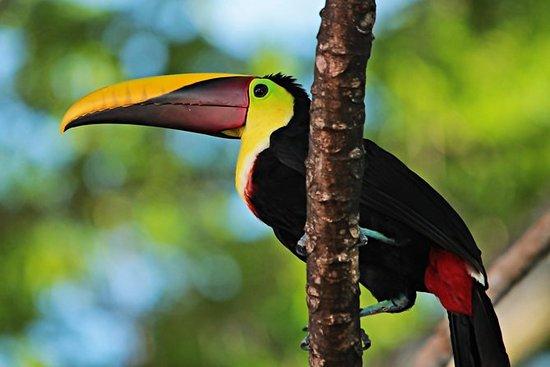 Tour privado de observación de aves...