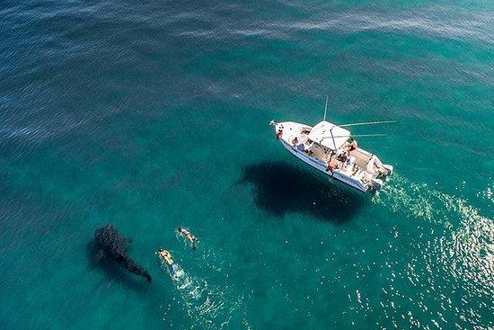 Aventura Del Tiburón Ballena