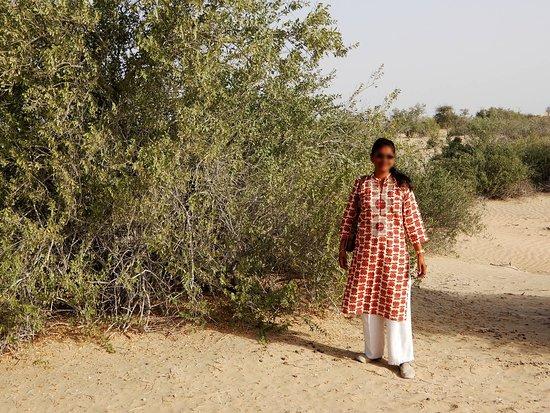 Liwa Oasis, United Arab Emirates: Man made forest in the desert