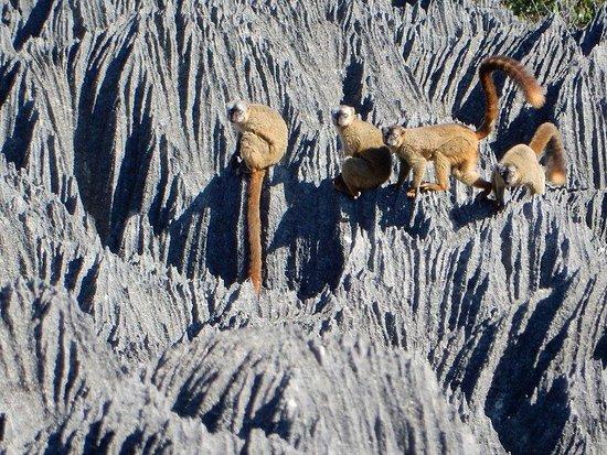 Tsingy de Bemaraha National Park, Madagascar: Tsingy of Bemaraha, a place to enjoy the amazing and unique limestone formation with its wildlife!