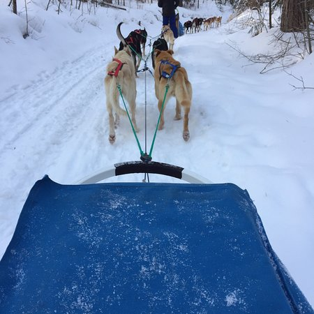North Ridge Ranch - Dog Sledding: Dogs LOVE to Run!  What an unforgettable experience! Thank you Brad and Leah!