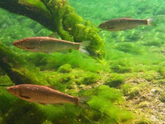 Trikala Region, Greece: River snorkling photo near the village of Mesochora in the Upper Acheloos river