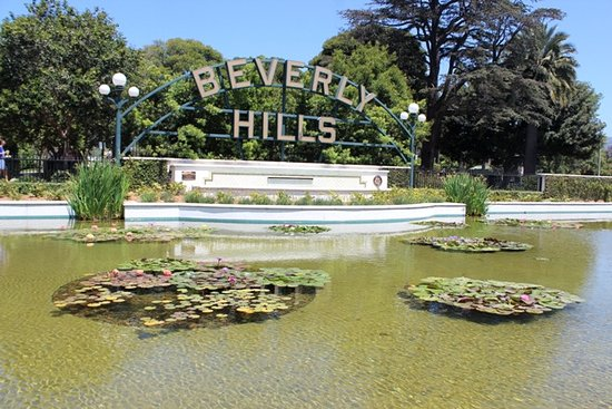 Beverly Hills, CA: Lily pond
