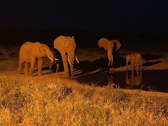 Eddie's Safari Kenya