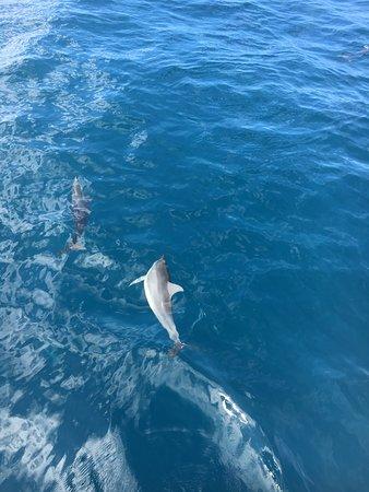 Passeio De Snorkel Deluxe Na Pali Em Kauai Com Mergulho Opcional: Views