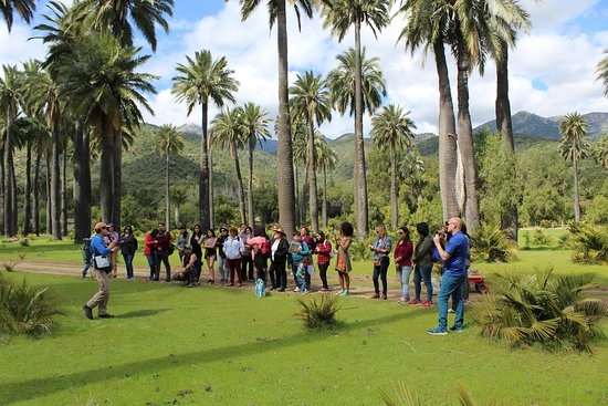 Las Cabras, Chili: turistas en el Palmar Milenario