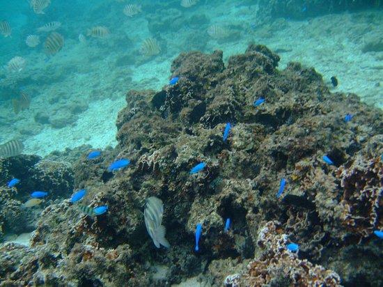 Sea Mole