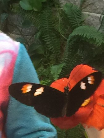 The Butterfly Palace: Butterfly on flower my granddaughter is holding