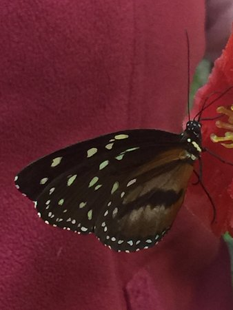The Butterfly Palace: Butterfly