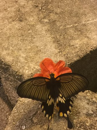 The Butterfly Palace: Butterfly on n artificial  flower vile of nectar.
