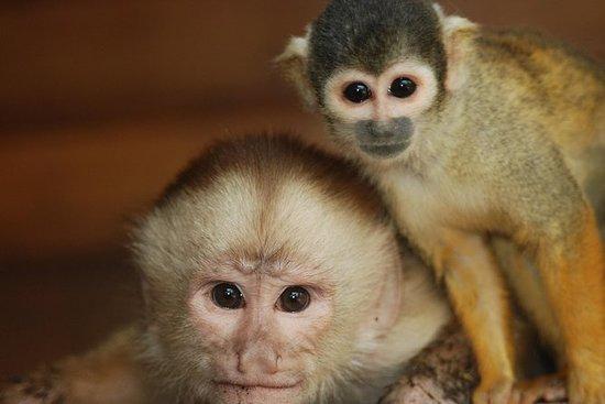 4-dags Amazon Jungle Tour på Eco...