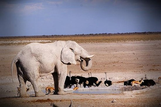4-dagars Etosha och Swakopmund ...