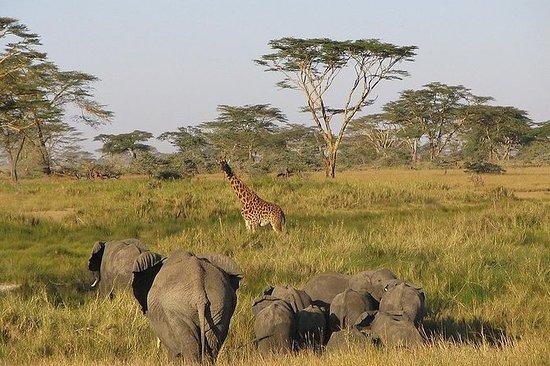 Safari di 8 giorni Il meglio del