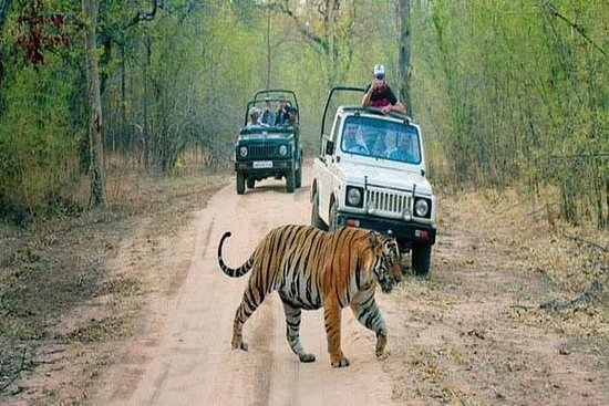 6-Day Private Tour From Delhi to...