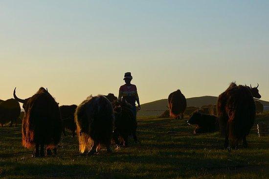 Tibet Nomad Adventure di 12 giorni