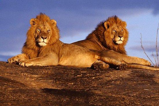 7-Day Amboseli and Tsavo National...