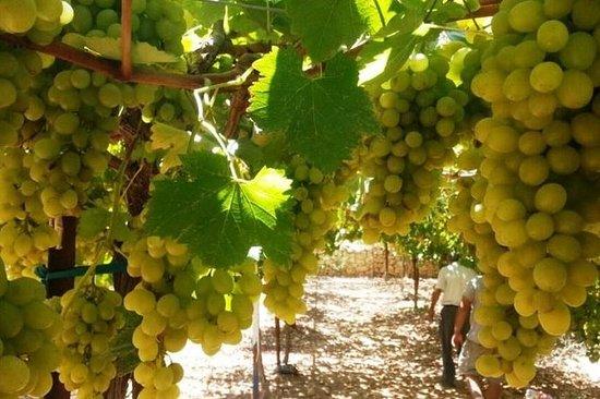 Circuit des vins du centre d'Israël...