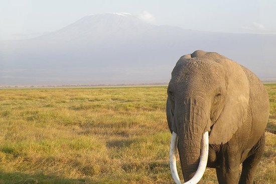 Safari Tsavo East and Amboseli NP...