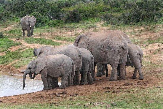 4-tägige Kap-nach-Addo Safari-Tour