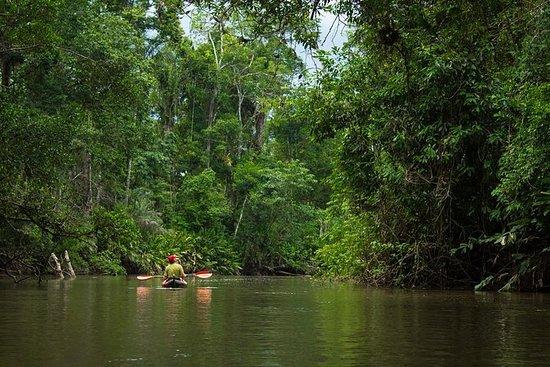 Experiencia amazónica de 5 días en...