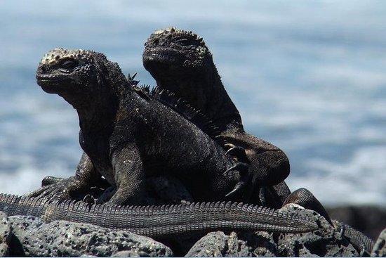 4-Day Galapagos Classic Tour