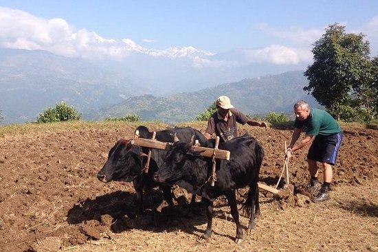 14 dager Bondefellesskapstur i Nepal