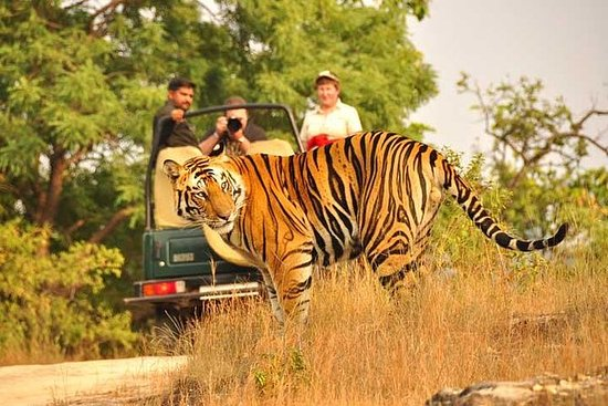 2-dages privat Ranthambhore tiger tur...