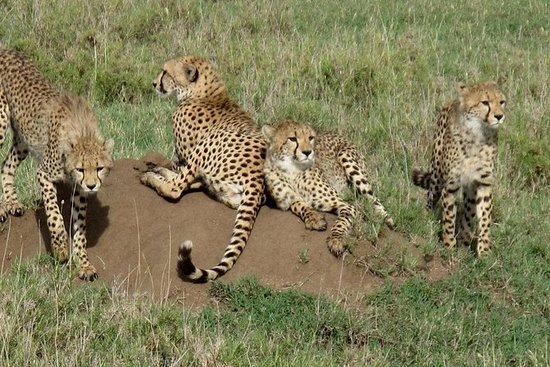 Safari Wild Life de 4 jours à Kidepo