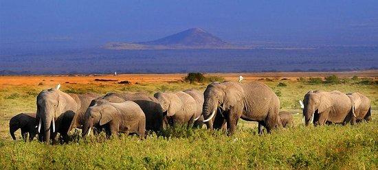 5day: Best of Kenya Big 5 Wildlife...