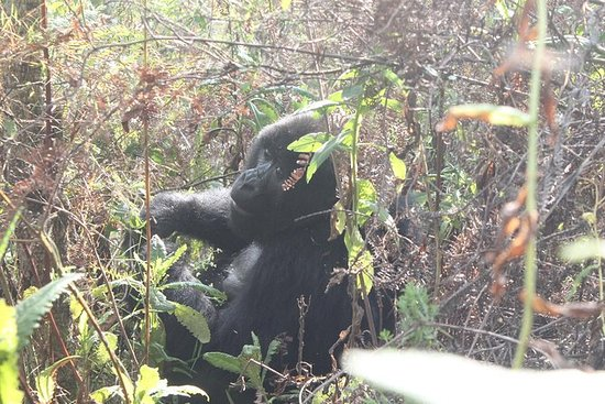 4 Days Gorilla Trekking Flying Safari...