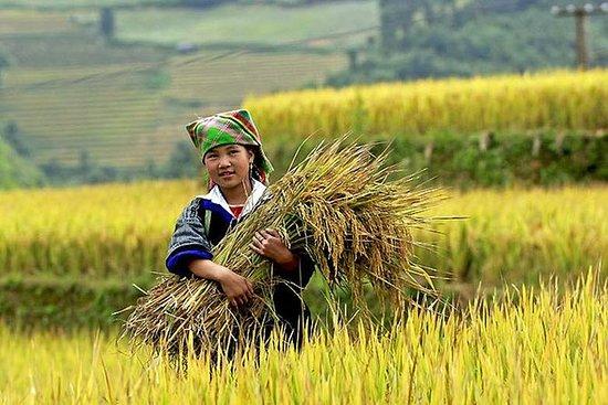河内越南山脉为期5天的私人旅游