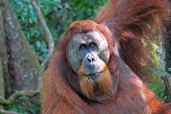 3泊2日Bukit Lawang&Orangutans