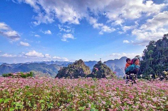 Amazing Ha Giang 3 dager 2 netter fra...