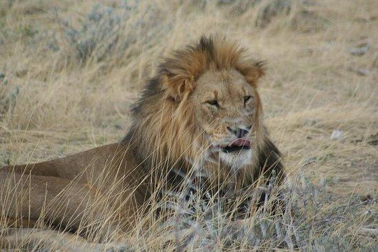 7. Tag: Rundfahrt durch Namibia