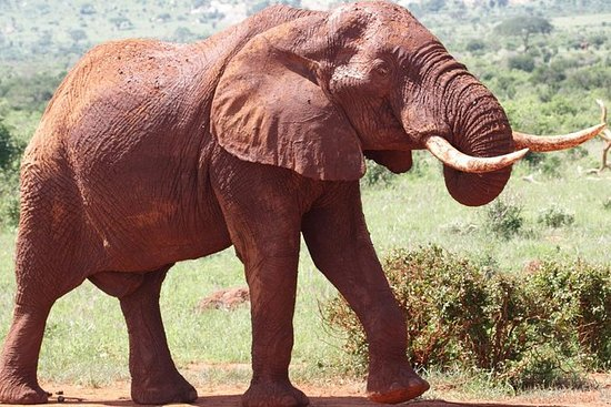 2-Day Tsavo East National Park Safari...