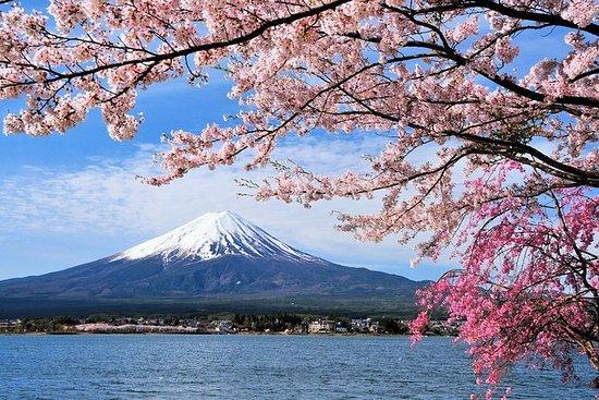 東京・京都・大阪複数日ツアー