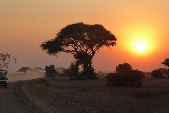 Malarone Vs Lariam - Tanzania Forum - TripAdvisor