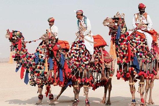 Utrolig Rajasthan med Pushkar Fair